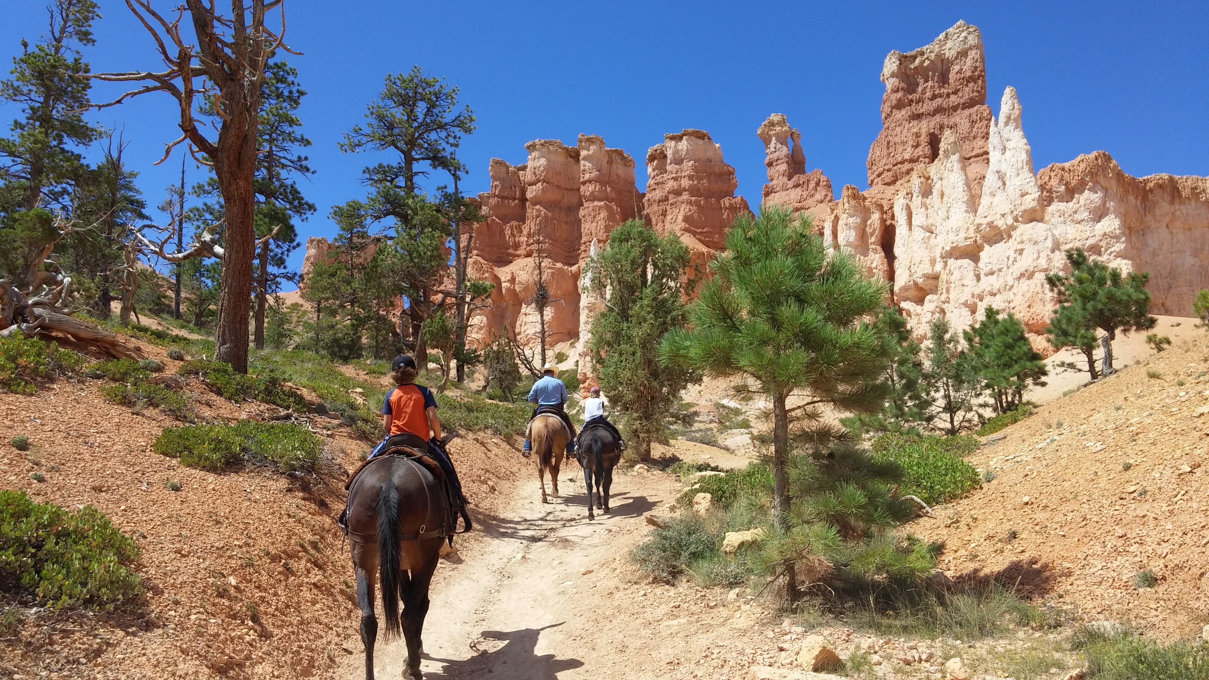 Bryce Canyon National Park 4 Radical Roadschoolers And A