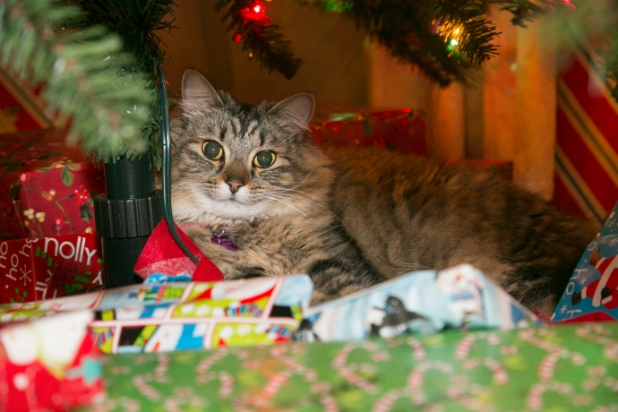 McKay_Christmas_2015_W0A4887